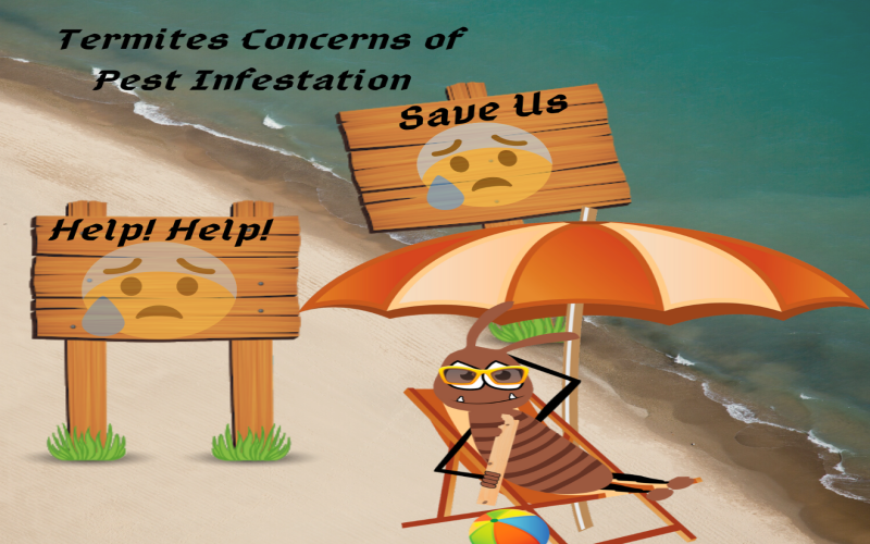 termites concerns of pest infestation