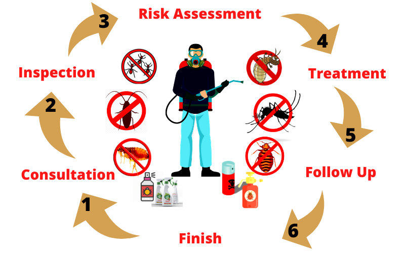 Steps to Control Pest