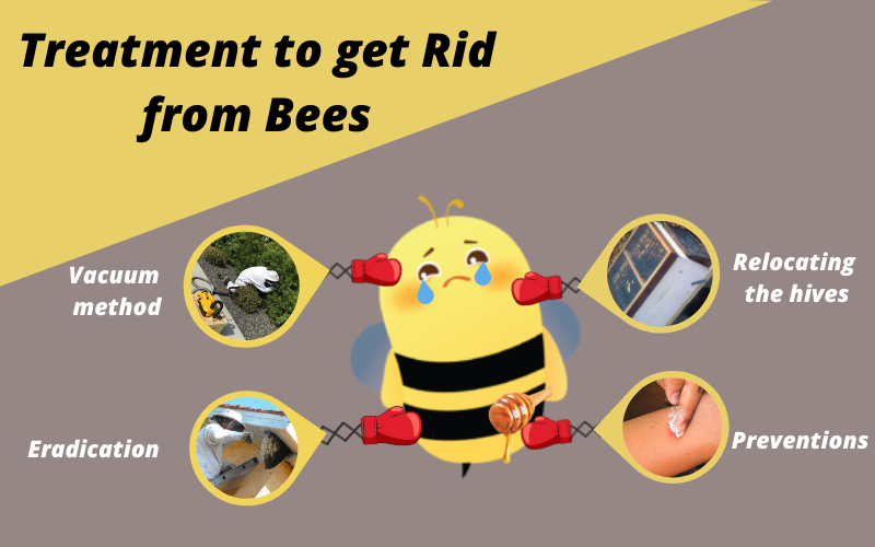 Treatment to get qid from bees