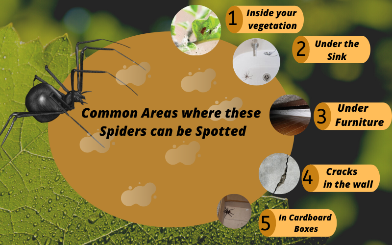 Common areas where these pests can be spotted