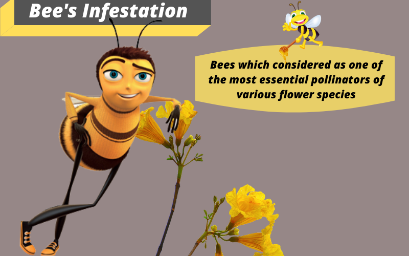 Bee's infestation