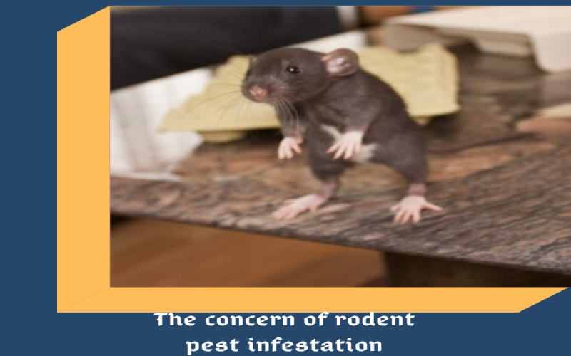 concern of rodent pest infestation