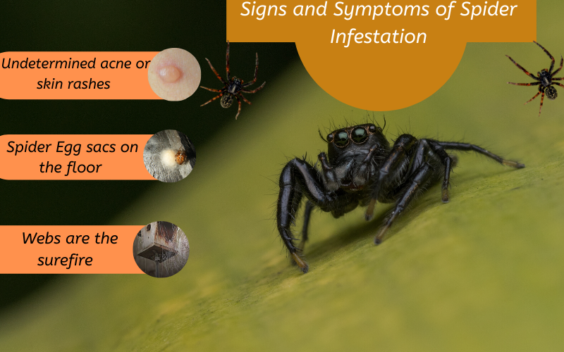 Signs and symptoms of spider infestation