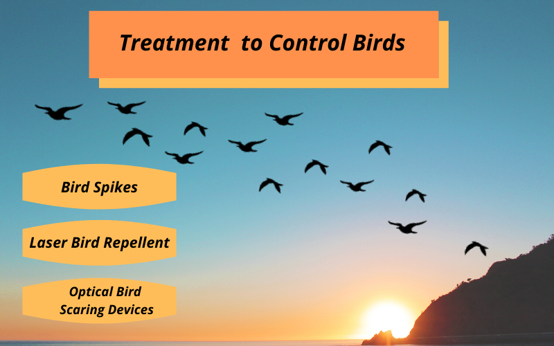 Treatment to control birds