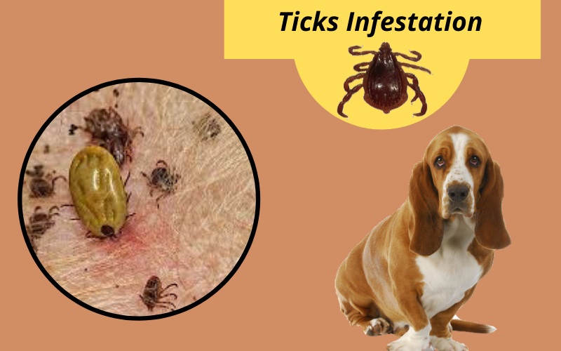 Ticks Infestation