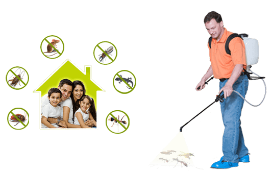 Benefits of Professional Pest Control Services at Home