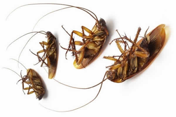 Methods to Get Rid of Cockroaches